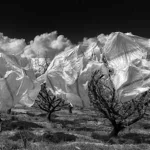 majid hojati, photography, black and white, fine art paper, 2016