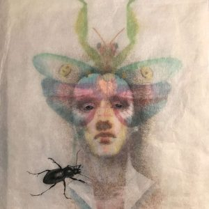 Roxana Manouchehri, Butterfly, mixed media on rice paper, 40x 30 cm, 2018